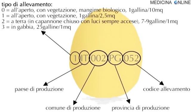 MEDICINA ONLINE UOVO GALLINA SCADENZA Come si legge l'etichetta delle uova (codici uova 0 1 2 3) POLLO ALL'APERTO IN GABBIA ALLEVAMENTO