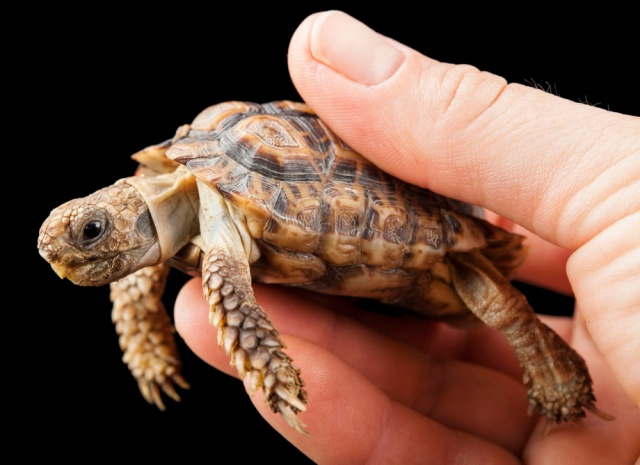 MEDICINA ONLINE ANIMALI ANIMALE NATURA PICCOLI MISURE TARTARUGA.jpg