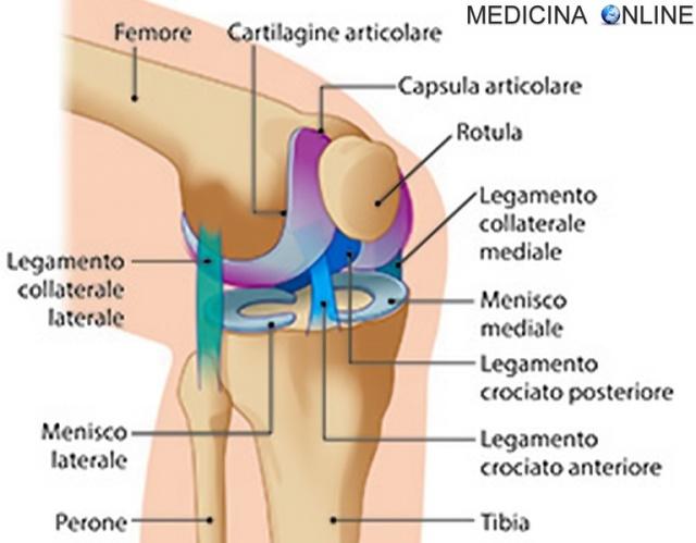 MEDICINA ONLINE articolazione del ginocchio patella rotula dolore osso ossa femore frattura tibia perone gamba piede scheletro apparato locomotore sport moviemento