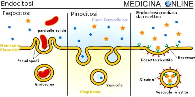 differenza tra batteri e virus yahoo