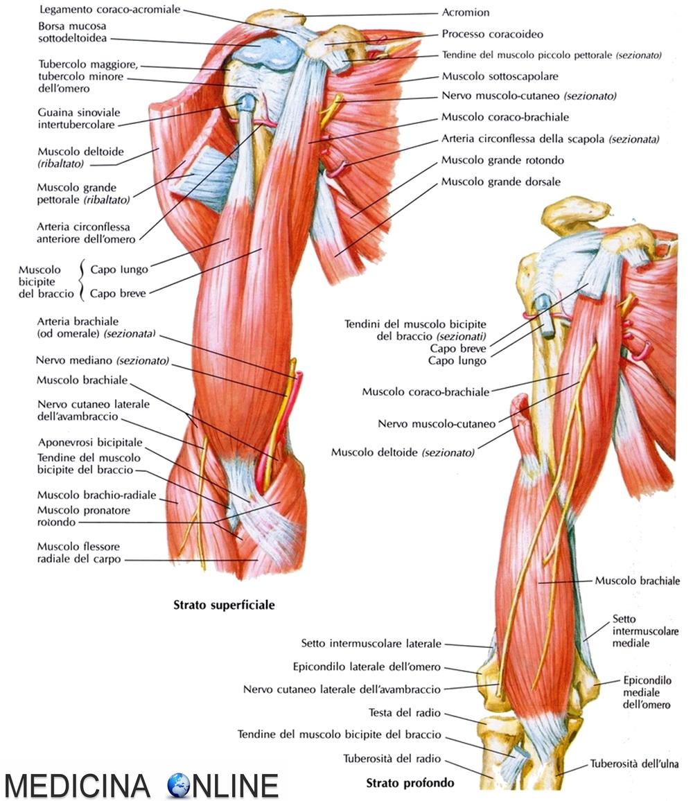 la prostata può ferire i muscoli adduttori?