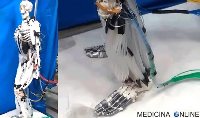 MEDICINA ONLINE MUSCOLI ARTIFICIALI ROBOTIC MUSCLES VIRTUA ARTIFICIAL PROTESI RIABILITAZIONE SCHELETRO.jpg