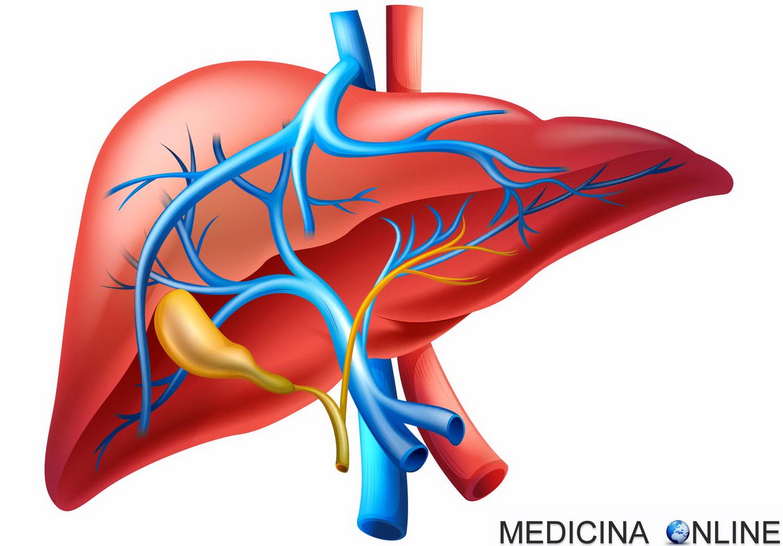 perdita di peso fegato fegato