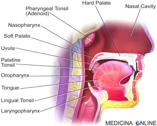 Mal di gola: sintomi, cause e cure. Persistente o virale?