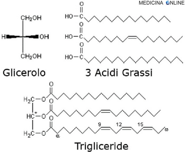 MEDICINA ONLINE TRIGLICERIDI CHIMICA BIOCHIMICA ACIDI GRASSI ADIPE TRIGLICERIDE LIPOLISI.jpg