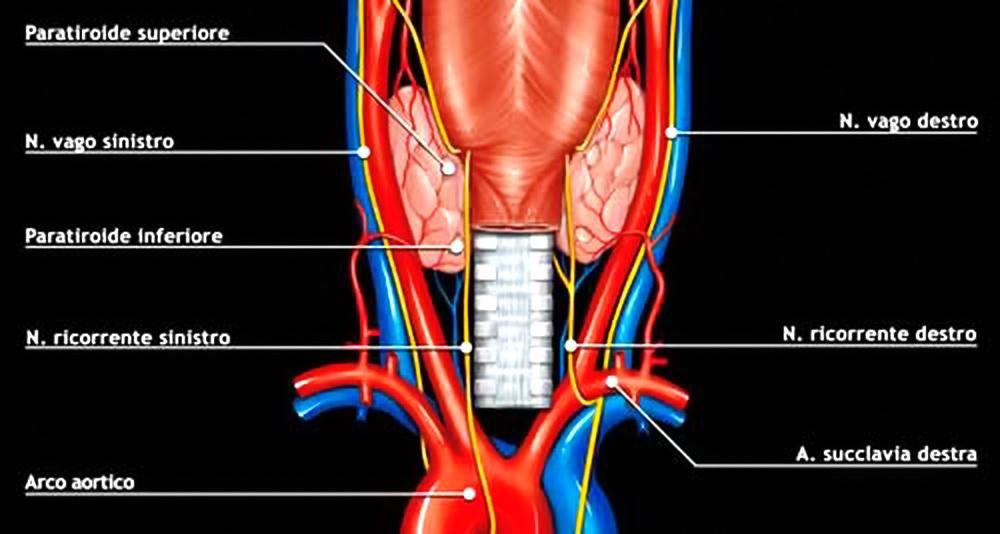 si possono ricostruire i nervi tagliati della prostata