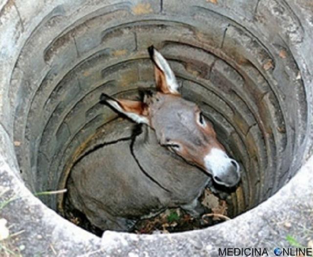 MEDICINA ONLINE L'asino nel pozzo come superare le avversità della vita.jpg