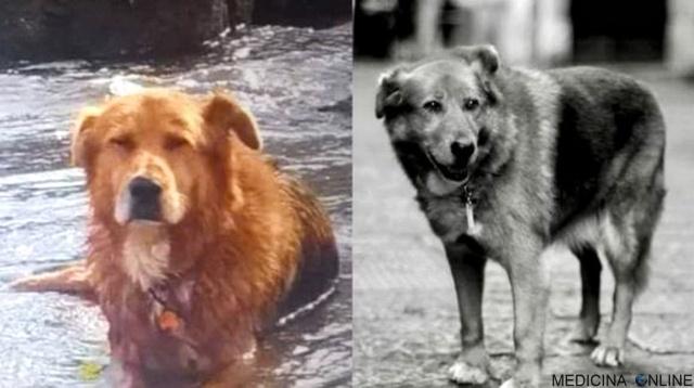 MEDICINA ONLINE Vietri è morto Billy il cane che ogni giorno vegliava la tomba del padrone.jpg