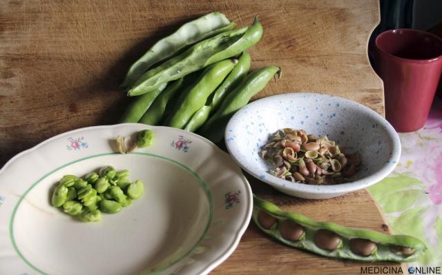 MEDICINA ONLINE FAVA FAVE VICIA FABE SBUCCIATA LEGUMI PROPRIETA BENEFICI VERDURA VALORI NUTRIZIONALI PROTEINE peeled broad bean.jpg
