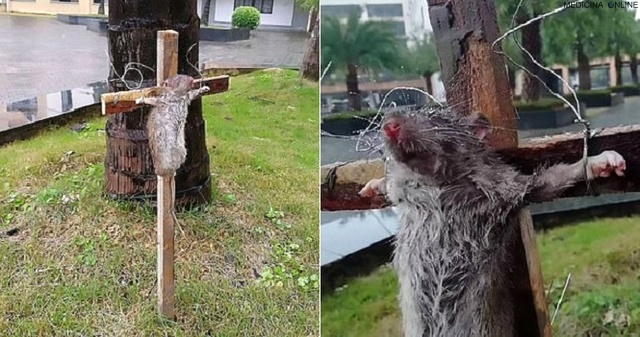 MEDICINA ONLINE STUDENTE CINESE CROCIFIGGE FUOCO VIVO TOPO RATTO RODITORE CRUDELTA ANIMALI SOFFERENZA chinese student crucifies rat-for eating his pet turtle.jpg