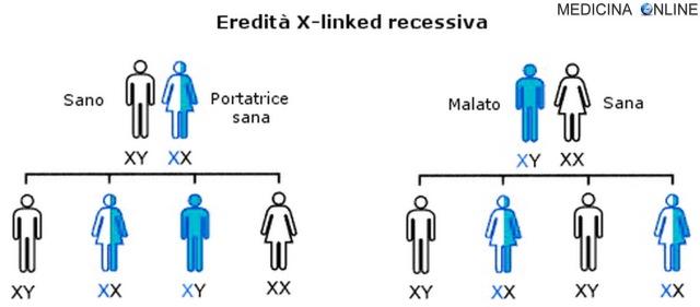 MEDICINA ONLINE Ereditarietà X linked RECESSIVA malattie legate al cromosoma X significato esempi.jpg