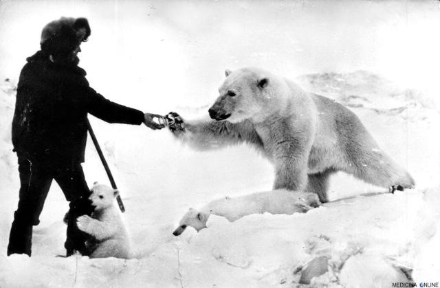 MEDICINA ONLINE Feeding polar bears from a tank, 1950 cub snow mangiare un animale affamato intera umanità ORSO POLARE NEVE SOLDATI SPEDIZIONE SIBERIA RUSSIA CIUKCI UNIONE SOVIETICA ANIMALI FOTO STORICA.jpg