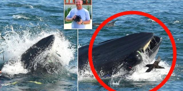 """MEDICINA ONLINE Sub ingoiato da una gigantesca balena, ma viene """"risputato"""" fuori.jpg"""