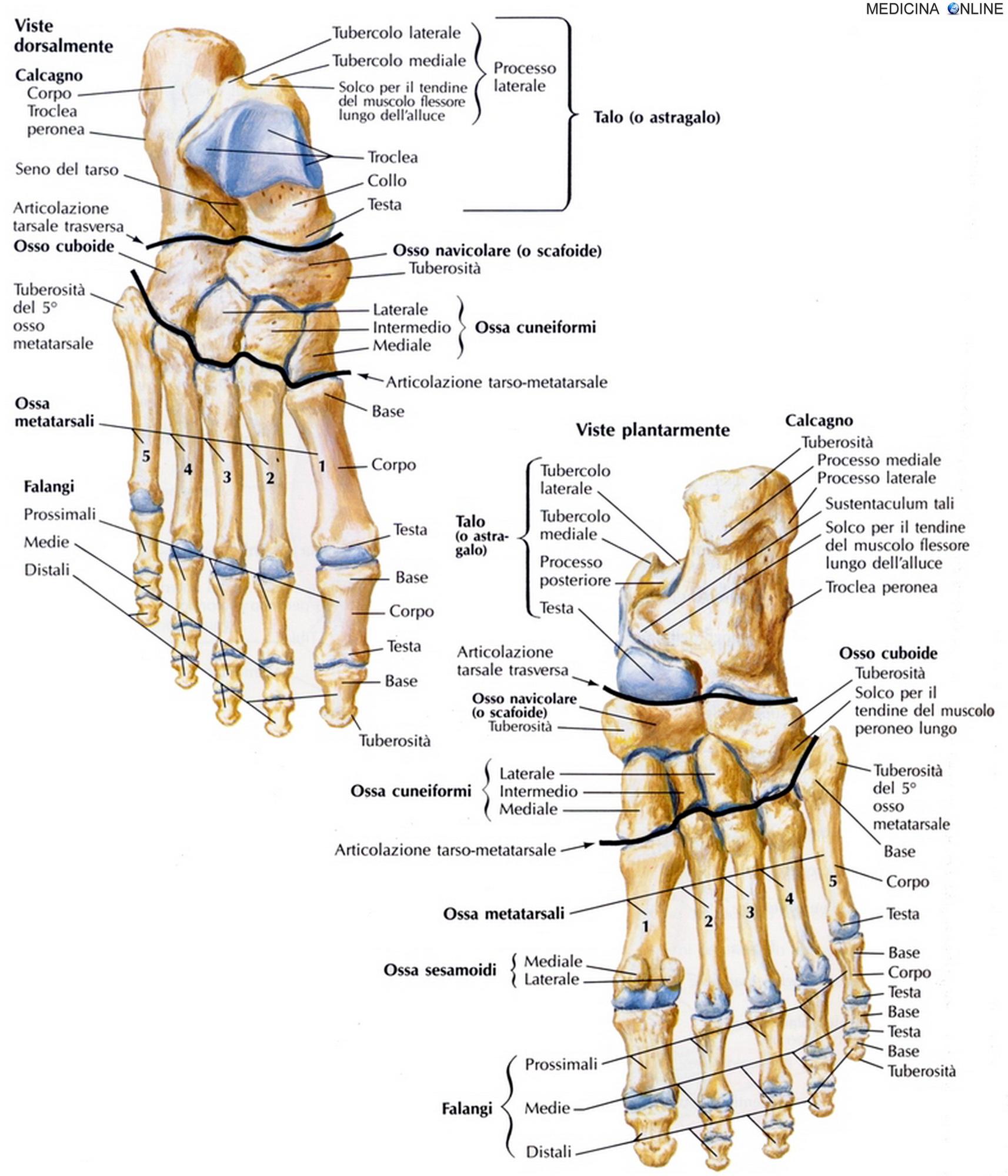 Frattura del piede e della caviglia