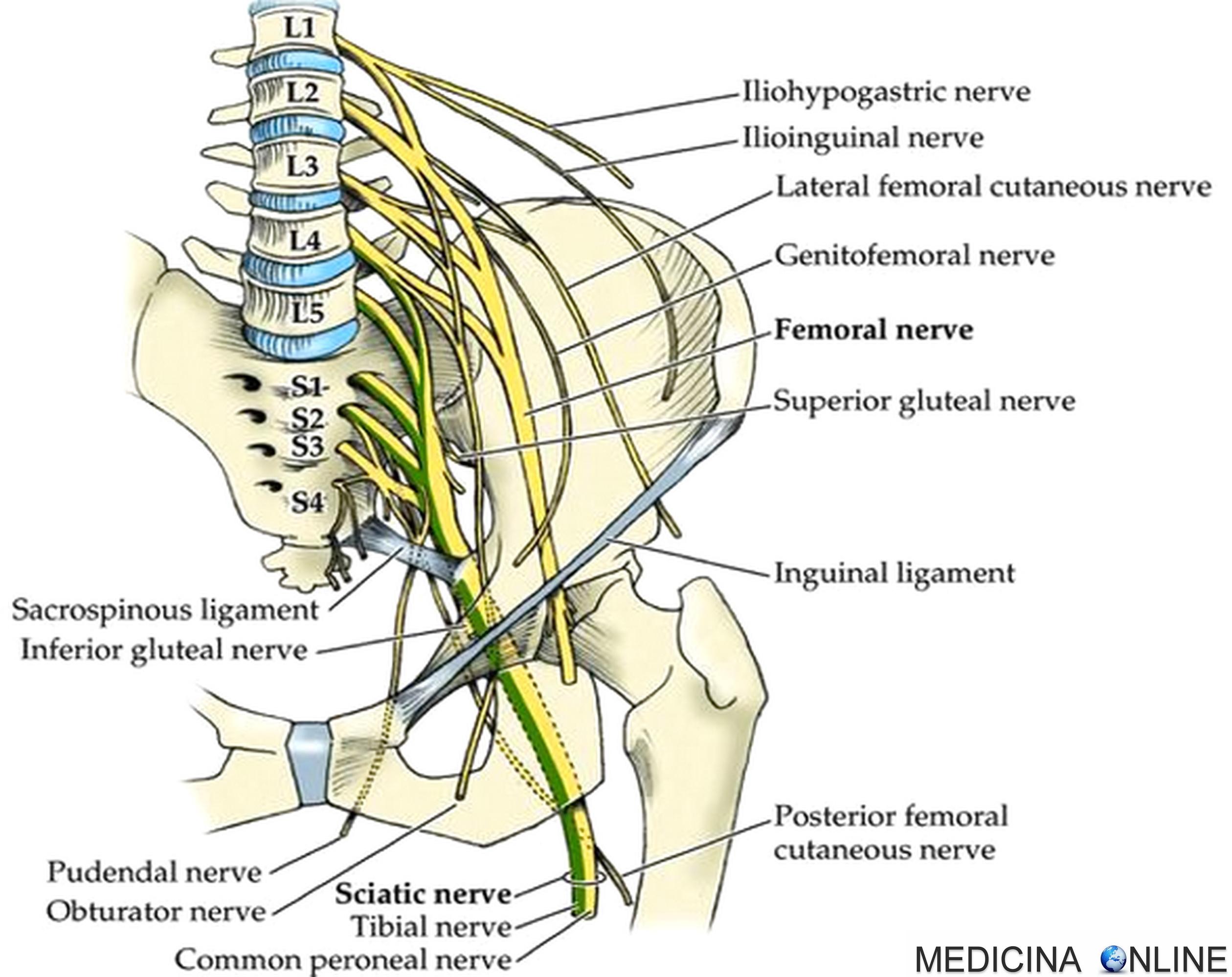 prostata del nervo pudendo