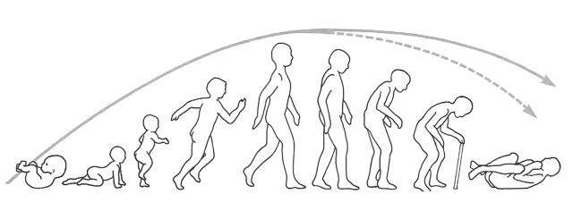 MEDICINA ONLINE Evoluzione della stazione eretta, della deambulazione e della paraplegia in flessione secondo Yakolev Disturbi della deambulazione da lesione dei lobi frontali.jpg