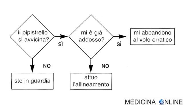MEDICINA ONLINE I sistemi percettivi nel regno animale l'esempio del pipistrello e la farfalla notturna diagramma di flusso.jpg