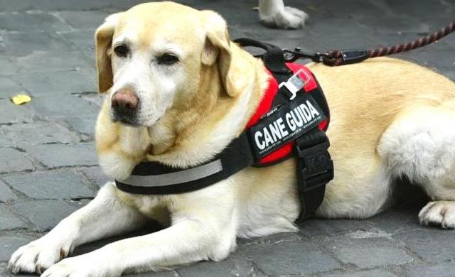 MEDICINA ONLINE CANE GUIDA PER CIECO NON VEDENTE ASSISTENZA ANIMALI AIUTO SOS EMERGENZA SERVICE DOG CANE DI SERVIZIO CANI.jpg