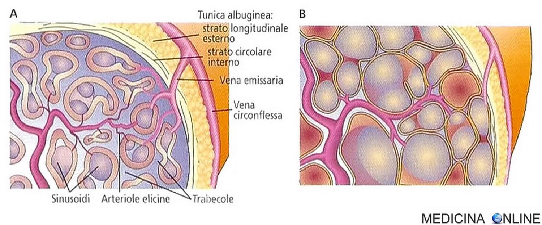 Balanite: cause, sintomi e cura - Paginemediche