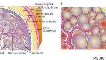 erezioni fisiologiche