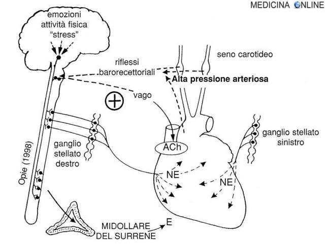 MEDICINA ONLINE cuore Fig. 1 - Ruolo del sistema nervoso autonomo, simpatico e parasimpatico, nel controllo del cuore.jpg