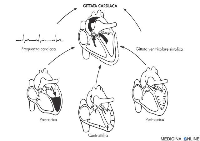 MEDICINA ONLINE GITTATA CARDIACA PRECARICO CONTRATTILITA POSTCARICA CUORE SANGUE CIRCOLAZIONE CARDIOLOGIA