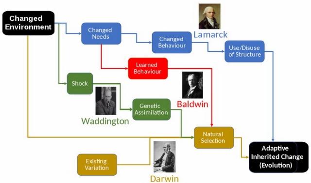 MEDICINA ONLINE EVOLUZIONE TEORIE James Mark Baldwin Effetto Baldwin Charles Darwin Darwinismo Jean-Baptiste de Lamarck Lamarckismo.jpg